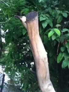 The branch looks like a bird peeking out behind the tree! I noticed this - so pleased!