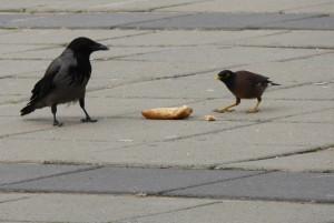 Standoff in the school yard