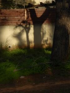 In the shadows (Naomi's Photos)