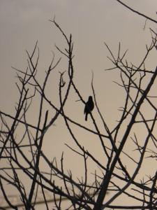 A lonely bird Naomi's photos