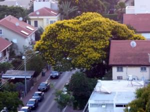 The local scene - yellow everywhere!